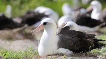World's Oldest Known Wild Bird Lays Egg at 67
