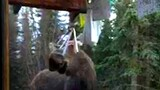 Musical Moose Jams on Wind Chimes?