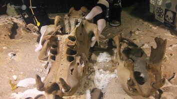 Fossil of New Giant Sloth Species Found in Underwater Cave