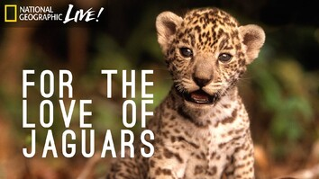 For the Love of Jaguars