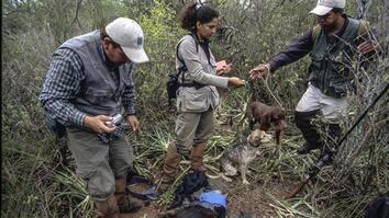 NG Live!: Erika Cuéllar: Hands-on Conservation