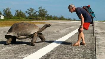 Explorer Interrupts Mating Tortoises, Slowest Chase Ever Ensues