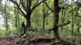 Slideshow: Cocos-Forest Primeval