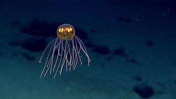 Mysterious Glowing Jellyfish Found in the Deep Sea