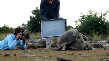 Proof: Seychelles Tortoises
