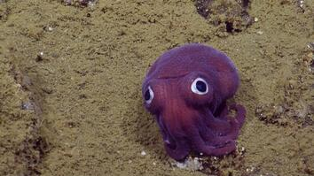 Adorable Googly-Eyed Sea Creature Puzzles Scientists