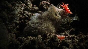 World's Deadliest:  Is This the World's Weirdest-Looking Killer?