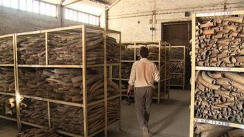 <i>Battle for the Elephants</i> Episode 4: Massive Ivory Stockpile
