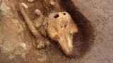 See the Mysterious Medieval Porpoise Bones Found by Archaeologists