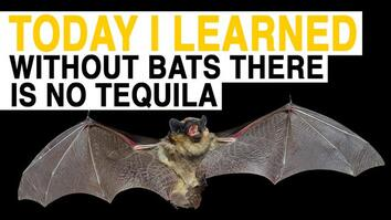 TIL: If You Like Tequila, You Should Love Bats. Here's Why.