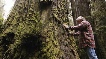 One Man's Mission to Revive the Last Redwood Forests
