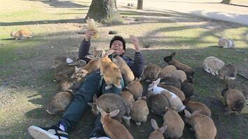"See Why They Call It ""Rabbit Island"""