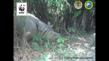 Endangered Baby Rhino Caught on Camera