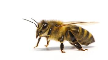 How do honeybees get their jobs?