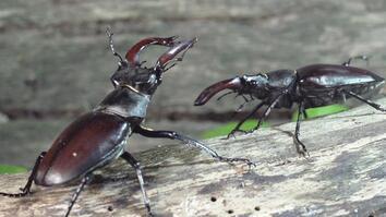 Peek Inside the Strange, Secret World of Bugs