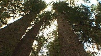 Great Bear Rain Forest