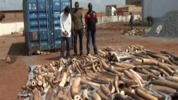 EXCLUSIVE: Confronting an Accused Ivory Smuggler
