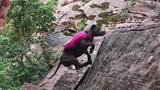 This Rescued Dog is an Avid Mountain Climber