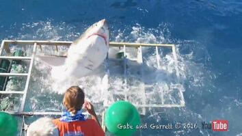 Diver Narrowly Escapes When Great White Shark Breaks Into Cage