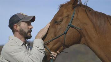 Horses Help Heal Veterans' Invisible Wounds
