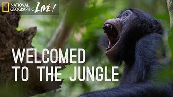 Welcomed to the Jungle
