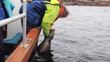 Watch: Rescuers Free Seal Trapped By Fishing Line