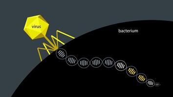 DNA Hacking Tool Enables Shortcut to Evolution