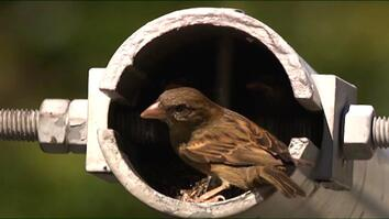 You're a Sparrow. Here's How to Survive New York