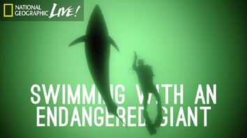 Swimming With an Endangered Giant