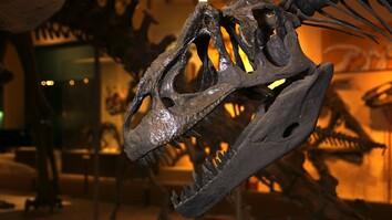 How Do You Dismantle a Dino? (Very Carefully)