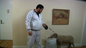 Acting Sheepish