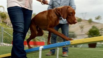 Cesar 911: Agility's Abilities