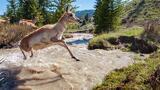 A Rare Look at an Incredible Animal Migration