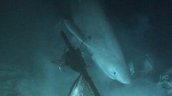 Shark tagged from submarine for first time in history