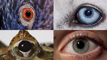 Watch: How Animals and People See the World Differently