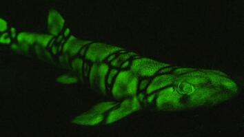 Sharks Light Up in Neon Colors