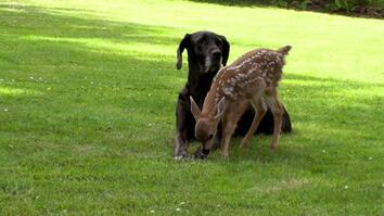 Kate the Great Dane and Pippin the Deer