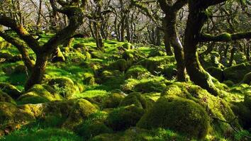 Thousands of Years Ago, This Was a Forest. See What Remains.