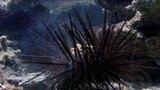 Sea Urchin Fertility