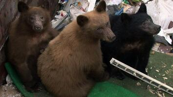 Dumpster Diving Bears