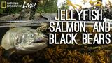 Photographing our Seas: Jellyfish, Salmon, and Black Bears