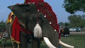 Elephant Wedding