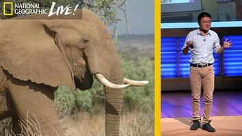 Bringing China and Africa Together to Save Elephants