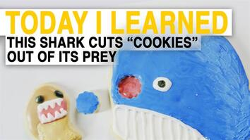TIL: How Cookiecutter Sharks Eat Is Terrifying (Explained With Cookies)