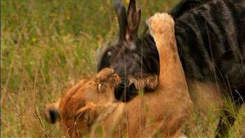 World's Deadliest: Lion's Killer Claws