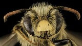 The Bee-utiful World of an Unconventional Scientist