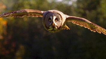 World's Deadliest: Super-Hearing Helps Owl Hunt