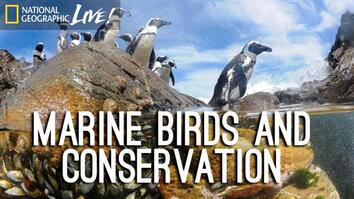 Photographing our Seas: Marine Birds and Conservation