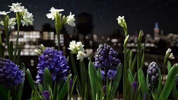 Watch a Garden Come to Life in This Absolutely Breathtaking Time-Lapse