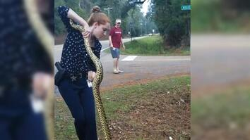 Florida Detective Wrangles 9-Foot-Long Anaconda